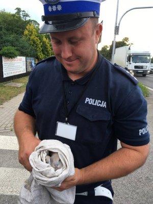 Policjant ruchu drogowego trzymający szarego ptaka